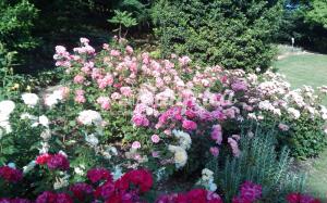 4 PRODUZ RO ORT rose gallery